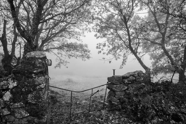 モンタンチェス近くの霧のある風景。エストレマドゥーラ。スペイン。