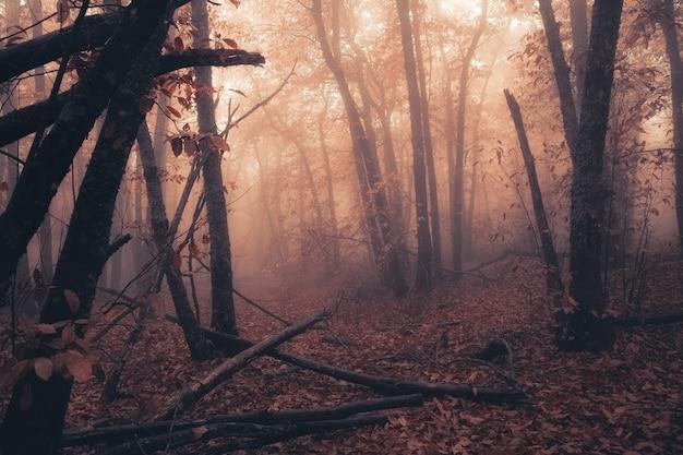 Пейзаж с туманом в каштановом лесу возле монтанчес. эстремадура. испания.