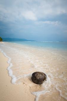 Кокосовый орех на пляже