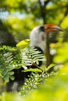 サヌールのバリ鳥公園