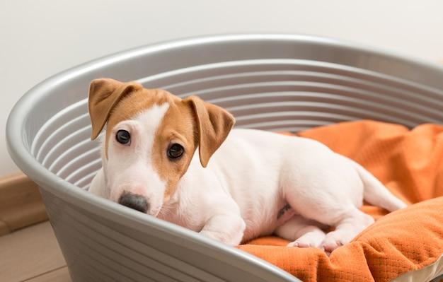 犬のベッドに横たわっているジャック・ラッセル・テリア