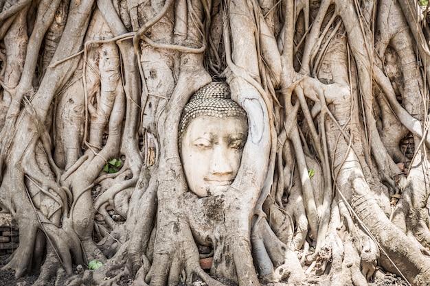 Статуя головы будды с пойманным в ловушку корнями дерева бодхи в историческом парке аюттхая в таиланде