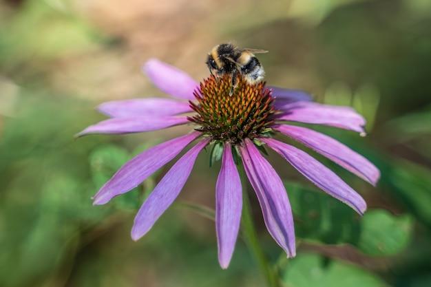 蜂と紫の花