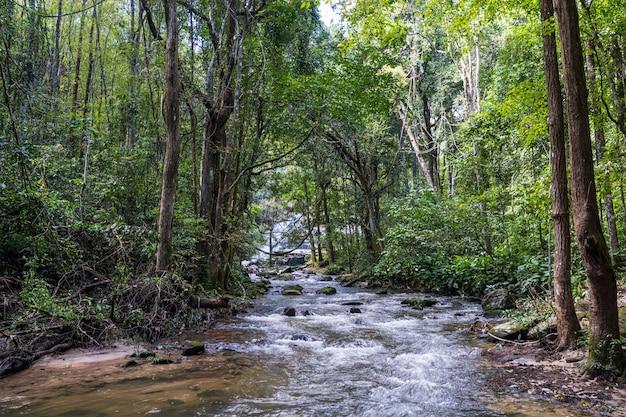 ジャングルの中で木に囲まれた川