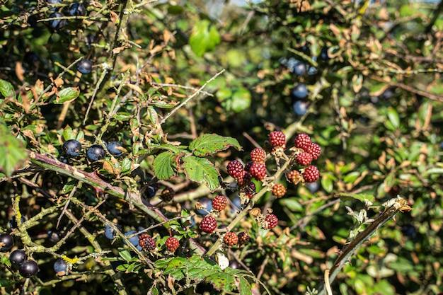 Ягоды фрукты на ветке