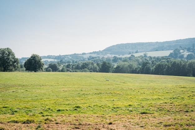 晴れた日に緑の木々の背景の風景と緑のフィールド