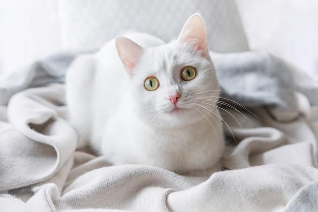 Белая кошка лежит на подоконнике
