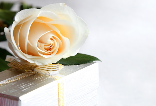 白いバラのクローズアップとギフト。