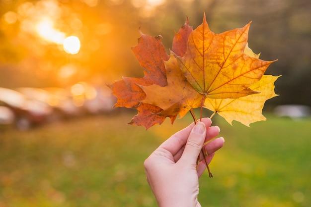 手、黄色、メープル、葉、秋、黄色、晴れた、背景