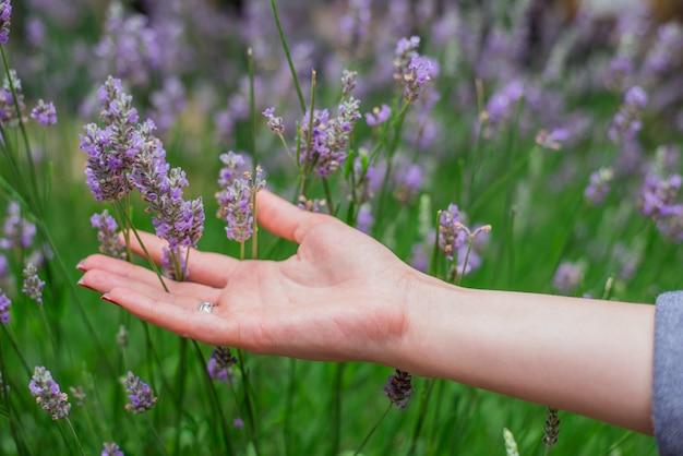 夏のラベンダー畑の夕日。フロに触れる手をつかむ