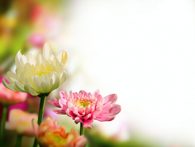 Весенние цветы на белом фоне