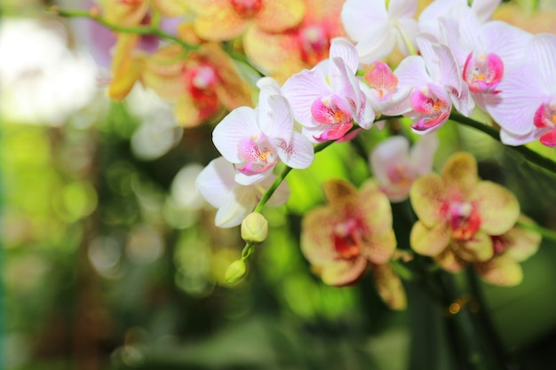 蘭春の花の背景