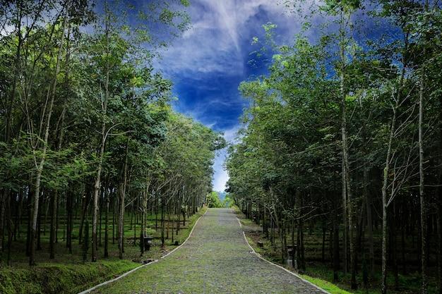 Природа фон с пути