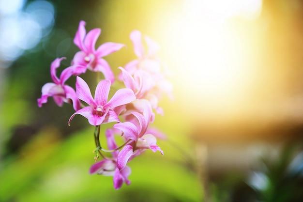 光フレアと蘭の花