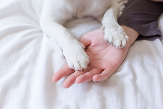 ベッドの上の白いシートに彼女の犬の足に触れる女性の手。朝、動物のコンセプトが大好きです。家庭、屋内、ライフスタイル。