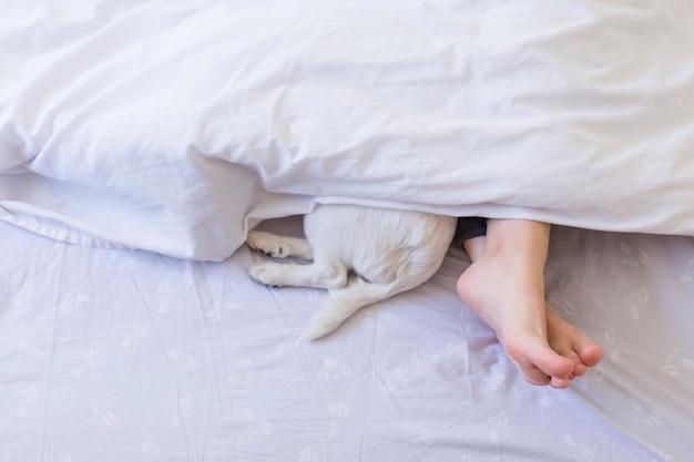 彼女のかわいい小さな犬のほかに白いカバーの後ろのベッドに女性の足の平面図。昼間、屋内でのペット、ライフスタイル。