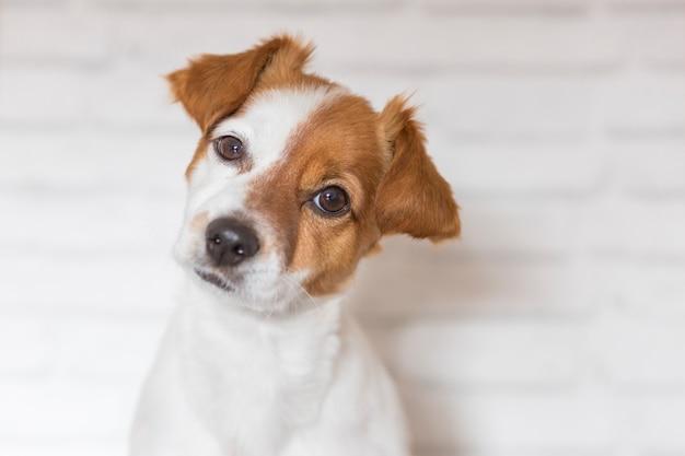 座っている美しい小型犬の肖像画を閉じる