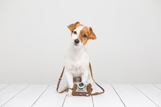 Портрет милой молодой маленькой собаки сидя на деревянном поле и используя коричневую винтажную камеру