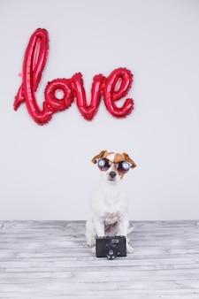 Портрет молодой красивой милой и маленькой собаки, сидящей на сером столе
