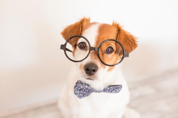 Милая умная собака с бабочкой и очки.
