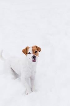 Милая маленькая собака в снегу на горе. зимний сезон