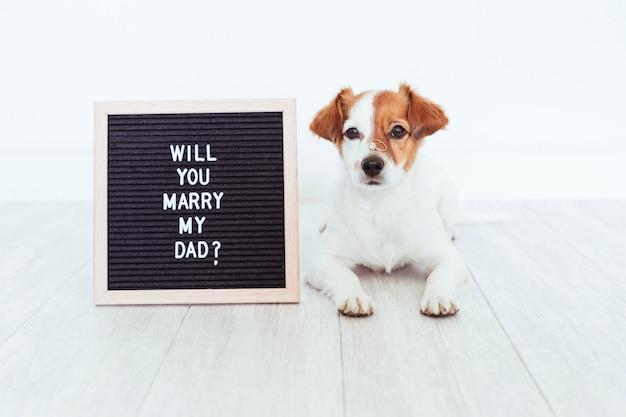 彼の鼻に結婚指輪を持つかわいい犬。結婚式のコンセプト