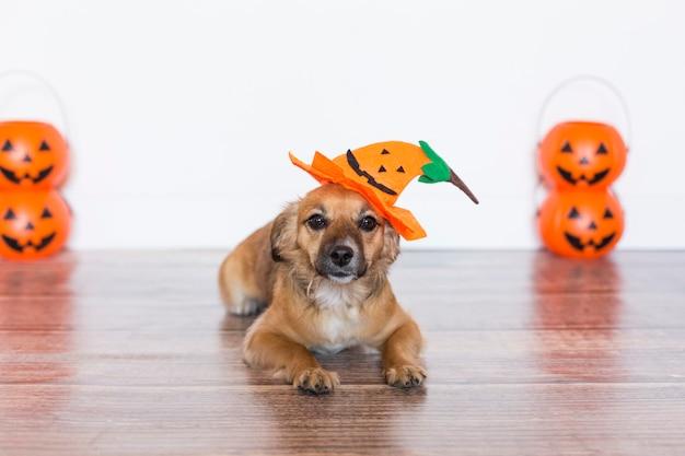 かぼちゃの衣装で木製の床に座っているかわいい犬。ハロウィーンのコンセプト。