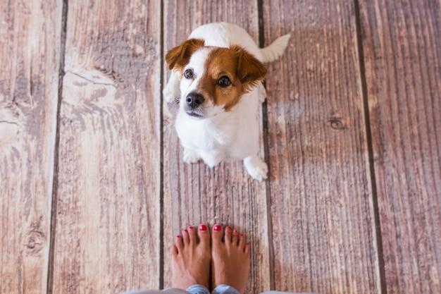 Милая маленькая собака, лежа на деревянный пол. рядом с его владельцами ноги. вид сверху. дневное время, стиль жизни