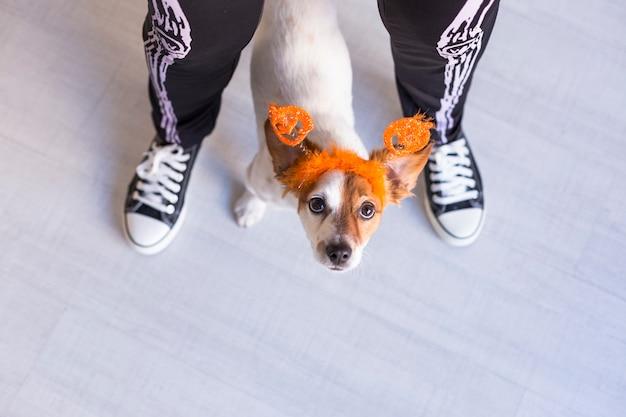 カボチャの王冠を身に着けている彼女のかわいい小さな犬を持つ若い女性の平面図。スケルトンの衣装を着ている女性。ハロウィーンのコンセプト