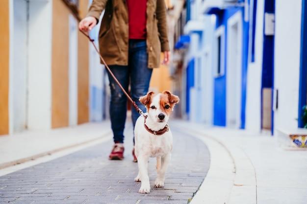 若い女性と彼女のかわいいジャックラッセル犬が街でカラフルな通りを歩いています。旅行の概念