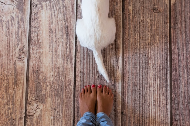 木製の床に横たわってかわいい犬。彼の所有者の足の隣。上からの眺め。昼間、ライフスタイル