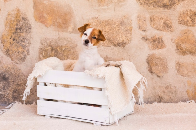 白い木製の箱でポーズをとって、カメラを見てかわいい若い犬。動物のコンセプトが大好きです。ペット。