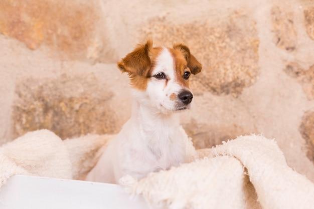 白い木製の箱でポーズかわいい若い犬。動物のコンセプトが大好きです。ペット。