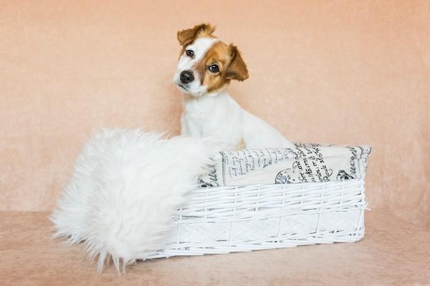 木箱に座って、カメラを見て美しいかわいい若い小さな犬。