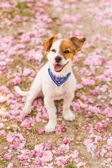 屋外の公園で楽しんでいるかわいい若い犬。春の時間。ピンクの背景