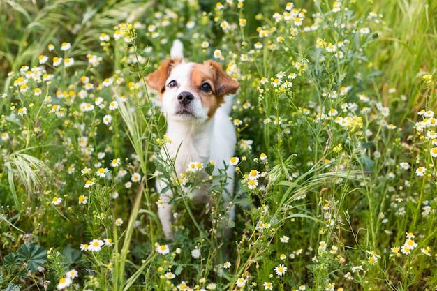 花と緑の草の中でかわいい小さな若い犬。春。動物のコンセプトが大好きです。ペット。