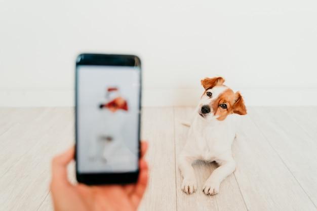認識できない女性が自宅でかわいいジャックラッセル犬の携帯電話で写真を撮る。技術とペットのコンセプト