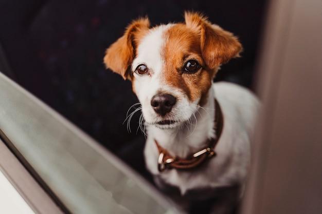 旅行の準備ができて車の中でかわいい犬