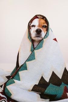 かわいいジャックラッセル犬は、自宅のベッドに座っている民族の毛布で覆われています。屋内のライフスタイル