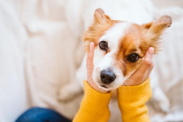 Молодая женщина, обнимая ее милая маленькая собака дома, сидя на диване
