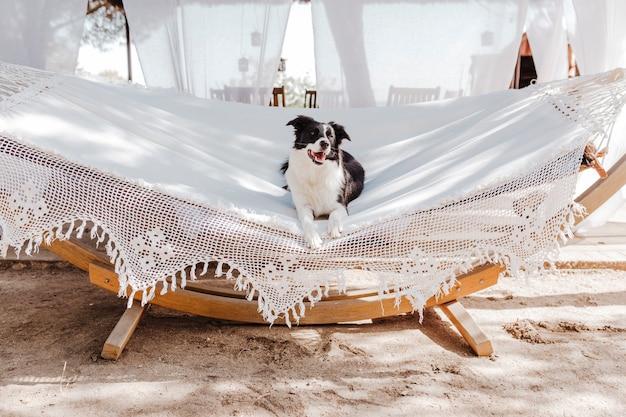 白いハンモックの上に横たわると屋外でリラックスした美しいボーダーコリー。夏とライフスタイル