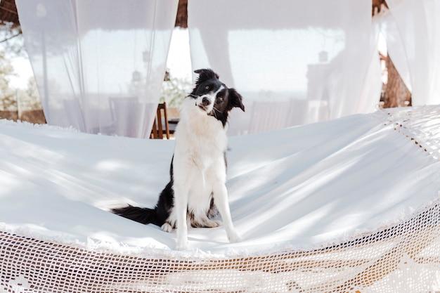 白いハンモックの上に座って、屋外でリラックスした美しいボーダーコリー。夏とライフスタイル