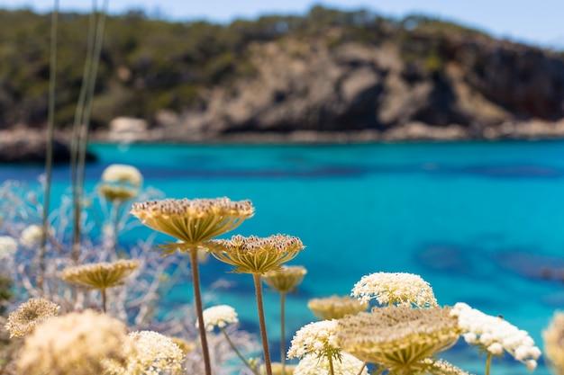 晴れた日に青い海のイビサの美しい風景。夏と休日のコンセプトです。前線にぼやけた花