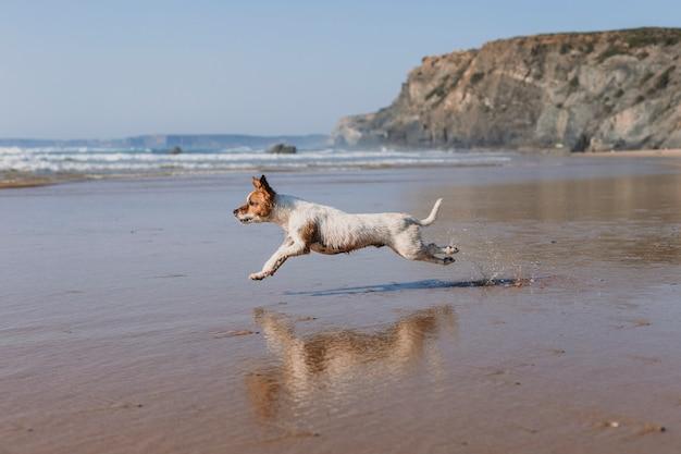 Красивая маленькая собака на берегу моря с отражением на воде.