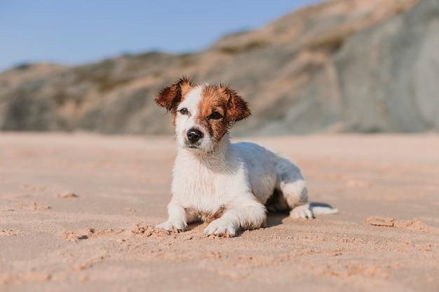 Счастливая милая молодая маленькая собака имея потеху на пляже лежа на песке.