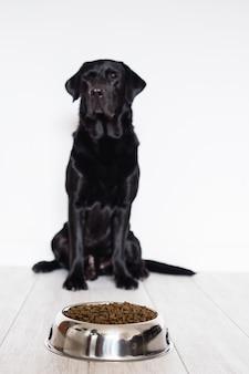 自宅でボウルに彼の食べ物を食べる準備ができて黒のラブラドール