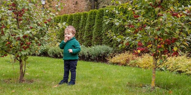 公園のかわいい男の子。秋の庭の素敵な小さな男の子の写真を閉じます。