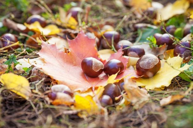 色とりどりの紅葉の栗。秋の時間