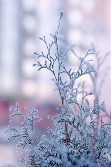 牧草地の乾いた草の霜。霜で覆われた草、野生の花、茂み。