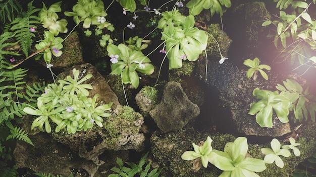 緑の葉と花の自然な植物の花のコンセプト。